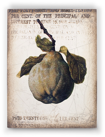 Ancient Pear