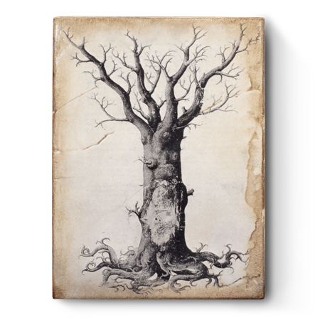 Medieval Tree of Life